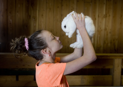 Kim Raff  |  The Salt Lake Tribune Gracie McCain holds a baby rabbit in the Savage Livery Stable during Baby Animal Season at This is the Place Heritage Park in Salt Lake City on April 1, 2013.