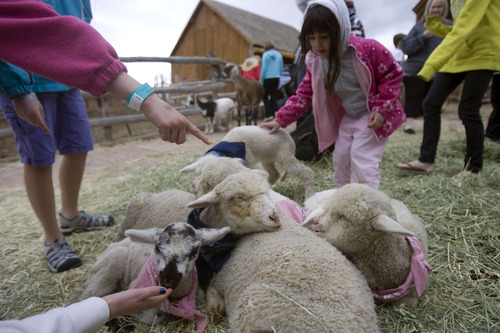 Kim Raff  |  The Salt Lake Tribune Park visitors pet sheep and lambs in the Petting Corral during Baby Animal Season at This is the Place Heritage Park in Salt Lake City on April 1, 2013. The event will continue until May 24.