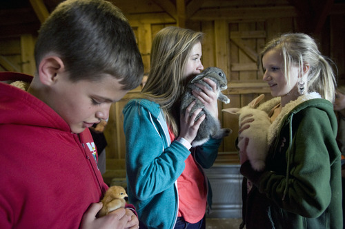 Kim Raff  |  The Salt Lake Tribune (from left) Derek Madsen, Michaela Madsen and Karee Christensen hold baby animals in the Savage Livery Stable during Baby Animal Season at This is the Place Heritage Park in Salt Lake City on April 1, 2013.