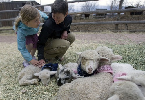 Kim Raff  |  The Salt Lake Tribune (left) Audrey Domyan and her mother, Sarah Domyan pet a baby lamb at the Petting Corral during Baby Animal Season at This is the Place Heritage Park in Salt Lake City on April 1, 2013. The event will continue until May 24.