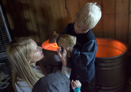 Kim Raff  |  The Salt Lake Tribune (left) Rachel and Isaac Lowry pet a baby rabbit in the Savage Livery Stable during Baby Animal Season at This is the Place Heritage Park in Salt Lake City on April 1, 2013.