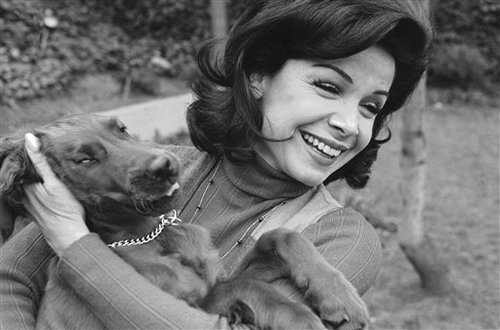 Former Mouseketeer Annette Funicello gets an enthusiastic greeting from Skippy, her Irish setter puppy, at home in Encino, Calif., March 13, 1978.(AP Photo/George Brich)