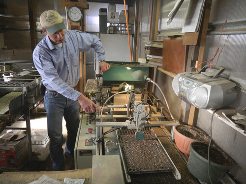 Tom Wharton   The Salt Lake Tribune Wayne Huber prepares a flat of vegetables for planting at Joe's Greenhouse in Layton.