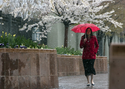 Kim Raff  |  The Salt Lake Tribune Jennifer Morgan-Dearinger walks through Temple Square as a wintry mix falls in Salt Lake City on Monday, April 15, 2013.