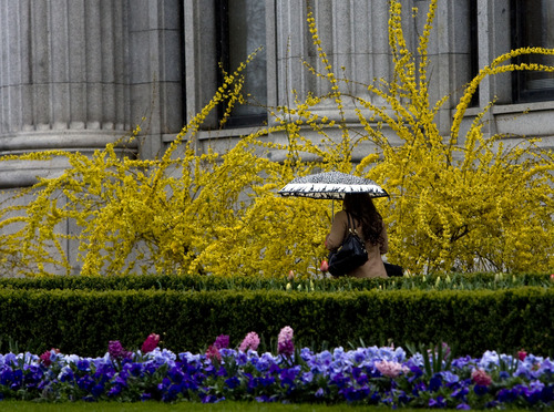 Kim Raff  |  The Salt Lake Tribune A woman walks past gardens in full bloom in Temple Square as a wintry mix falls in Salt Lake City on Monday, April 15, 2013.