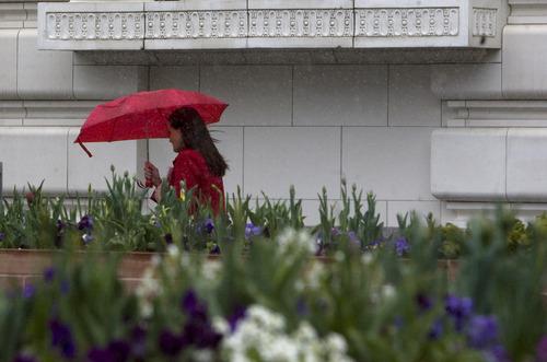 Kim Raff  |  The Salt Lake Tribune Jennifer Morgan-Dearinger walks past plants in full bloom in Temple Square as a wintry mix falls in Salt Lake City on Monday, April 15, 2013.