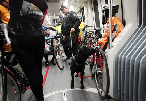 Ashley Detrick  |  The Salt Lake Tribune Millie, a black lab, and her handler Douglas Neibauer of Homeland Security sweep the TRAX car for bombs before the start of the Salt Lake Marathon on Saturday April 20, 2013.