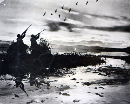(Utah State Historical Society)  Scene on the Bear River Migratory Refuge. More than 200 species of shore birds have been identified, including 28 species of ducks, seven species of geese and also many types of rare and exotic birds such as the snowy egret, sand hill crane and white pelican.