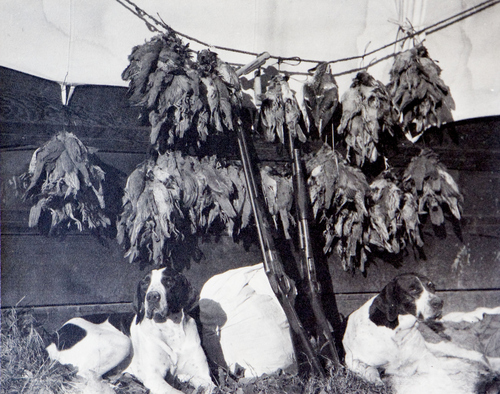 (Utah State Historical Society)  Hunting dogs and market ducks.