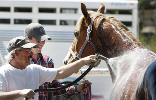 "Steve Griffin | The Salt Lake Tribune   Chad Giles, left, and Dustin GIles, of Stockton, Utah, wash ""Tyler's Cartel"" at the Salt Lake Equestrian Park in South Jordan, Utah Friday April 26, 2013.  Tyler's Cartel will be racing at the park April 27, 2012."