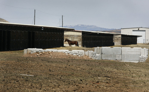 Scott Sommerdorf   |  The Salt Lake Tribune A lone horse stands near the barns at Wyoming Dows, Thursday, April 25, 2013. Paul Nelson is working as a contractor on the re-opening of Wyoming Downs race track, owned by his brother Eric Nelson. The track has been dormant for 4-5 years and the Nelson brothers are working to bring it back to life.