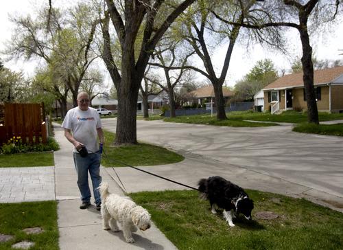Kim Raff  |  The Salt Lake Tribune Dennis Bird walks his dogs, Bailey, left, andMisty, on Rambler Drive in the Rose Park neighborhood in Salt Lake City.