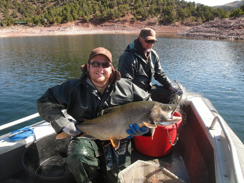 | Utah Division of Wildlife Resources photo Flaming Gorge Project technician Ben Carswell holds a 32-pound lake trout.
