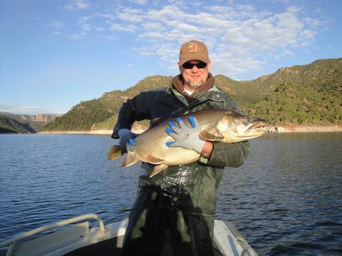 | Utah Division of Wildlife Resources photo Great Salt Lake biologist Jim Vanleeuwen holds a 28-pound lake trout at Flaming Gorge.