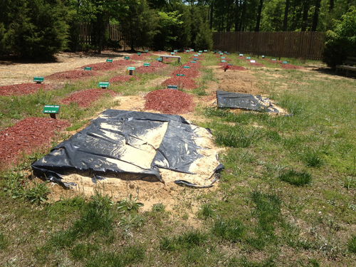 The alleged burial site of Boston Marathon bombing suspect Tamerlan Tsarnaev is covered in Doswell, Va. on May 10, 2013.  Ruslan Tsarni, the uncle of Tamerlan Tsarnaev said Tsarnaev was buried in the cemetery in Doswell, near Richmond.  Tsarnaev was killed April 19 in a getaway attempt after a gunbattle with police. His younger brother, Dzhokhar, was captured later and remains in custody.  (AP Photo/The Free Lance-Star, Robert A. Martin)