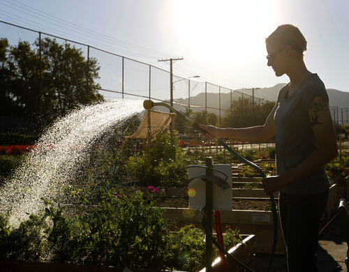 Al Hartmann     Tribune file photo Crystal Hammer waters her vegetable plot at the Sugar House Common Garden in Salt Lake City on June 12, 2012, before going to work. The garden is planted and tended by garden members who grow food for their families.