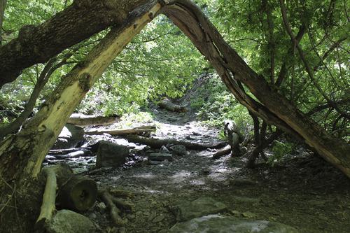 Ferguson Canyon. Courtesy image