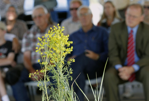 Al Hartmann  |  The Salt Lake Tribune Wasatch and Summit county officials with the Utah Department of Agriculture gather for a demonstration in Midway Monday June 10 for controling the spread of leafy spurge, a noxious weed found within Wasatch County. The county's weed control program sprays for invasive weeds like leafy spurge and several others from a specially fitted rail car on the Heber Valley Railroad as part of efforts to control invasive weeds statewide.