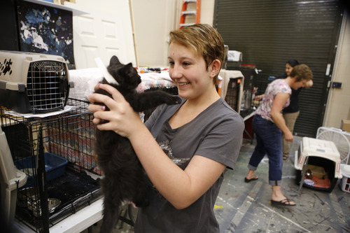Dani Clopton, 14, visits with her kitten, Soldier, at the American Red Cross shelter in Monument, Colo., for evacuees from the nearby Black Forest wildfire on Friday, June 14, 2013. Nearly 4,000 people are still evacuated from the fire that broke out on Tuesday. (AP Photo/Ed Andrieski)
