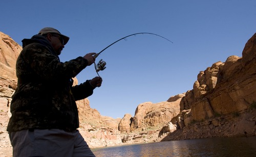 Al Hartmann  |  The Salt Lake Tribune George Sommer lands a fish in Lake Powell's Good Hope Bay.