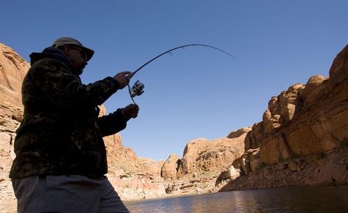 Al Hartmann  |  The Salt Lake Tribune George Sommer lands a fish in Lake Powell's Good Hope Bay.