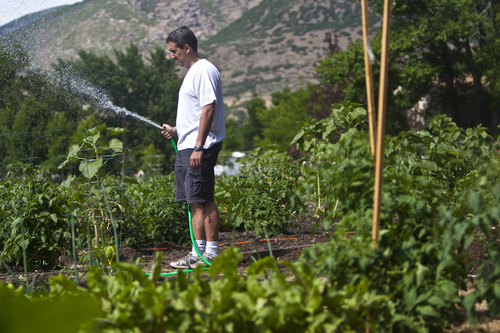 Chris Detrick  |  The Salt Lake Tribune Michael Whiteley, of Centerville, waters his wife's vegetables and flowers on their plot of land at the Centerville city garden Friday June 21, 2013.