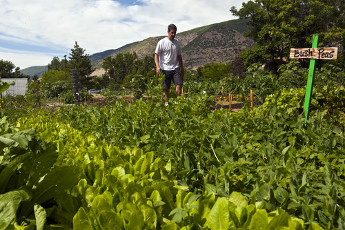 Chris Detrick  |  The Salt Lake Tribune Michael Whiteley, of Centerville, walks through the Centerville city garden on Friday after watering his wife's vegetables and flowers on their plot of land.