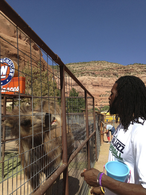 Bill Oram  |  The Salt Lake Tribune Utah Jazz forward DeMarre Carroll meets with a camel in Moab, Utah, during his Jr. Jazz tour. The tour might be his last act as a member of the Utah Jazz as he enters free agency Sunday at midnight.