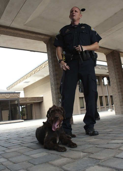 Michael McFall | The Salt Lake Tribune Patrolman Drew Hubbard is partnered with Zima, a German Wirehair Pointer, one of the Provo Police Department's two new bomb-sniffing dogs. The dogs are a first for the city, which just added semiweekly flights from the municipal airport to Los Angeles.