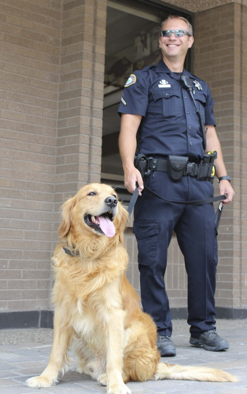Michael McFall | The Salt Lake Tribune Officer Bryce Lewis is partnered with Billy, a golden retriever, one of the Provo Police Department's two new bomb-sniffing dogs. The dogs are a first for the city and will help keep large events, such as the Freedom Festival, secure.