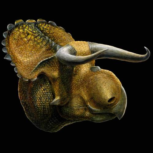 Courtesy | Lukas Panzann  An artist's version of the newly named horned dinosaur Nasutoceratops titusi discovered in Grand Staircase-Escalante National Monument in southern Utah.