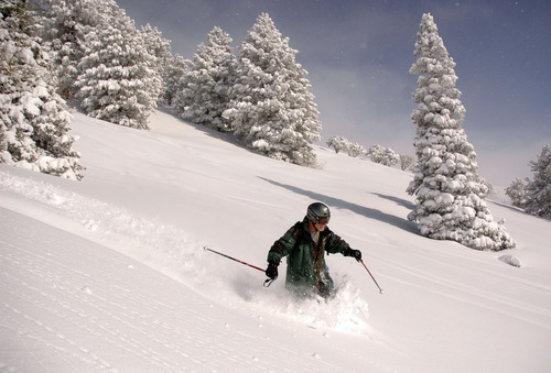Salt Lake City - Powder Mountain cat skiing.  Photo by Francisco Kjolseth/The Salt Lake Tribune 02/10/2009