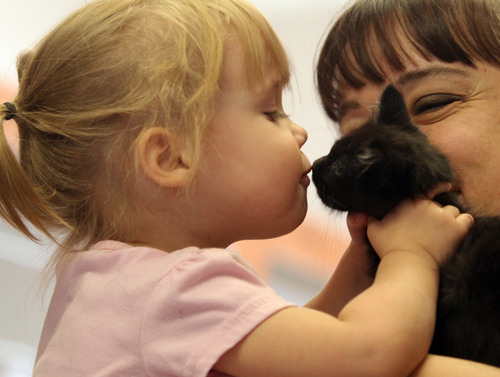 Rick Egan    The Salt Lake Tribune   Alyssa Hansen, 4, kisses a kitten while visiting Kitty City at the Utah Humane Society with her mother, Lora Hansen, Monday, July 29, 2013. The Humane Society of Utah has reduced the adoption fee for kittens and cats through August to deal with a large influx of adoptable animals.