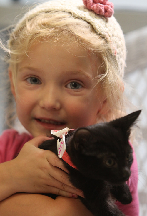 Rick Egan    The Salt Lake Tribune   Nevaeh Warn, 4, holds a kitten at the Utah Humane Society, Monday, July 29, 2013. The Humane Society of Utah has reduced the adoption fee for kittens and cats through August to deal with a large influx of adoptable animals.