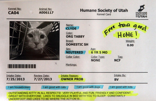 Rick Egan    The Salt Lake Tribune   This cat is available for adoption for free at the Utah Humane Society, Monday, July 29, 2013. The Humane Society of Utah has reduced the adoption fee for kittens and cats through August to deal with a large influx of adoptable animals. As is always the case, the adoption fee for older cats is waived entirely.