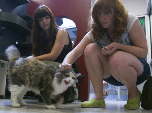 Rick Egan    The Salt Lake Tribune   Mikayla Chadwick and Nicole Speinfeldt pet a cat at the Utah Humane Society, Monday, July 29, 2013. The Humane Society of Utah has reduced the adoption fee for kittens and cats through August to deal with a large influx of adoptable animals.