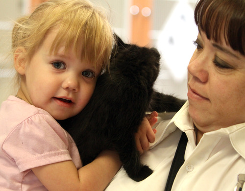 Rick Egan    The Salt Lake Tribune   Alyssa Hansen, 4, holds a kitten while visiting Kitty City at the Utah Humane Society with her mother, Lora Hansen, Monday, July 29, 2013. The Humane Society of Utah has reduced the adoption fee for kittens and cats through August to deal with a large influx of adoptable animals.