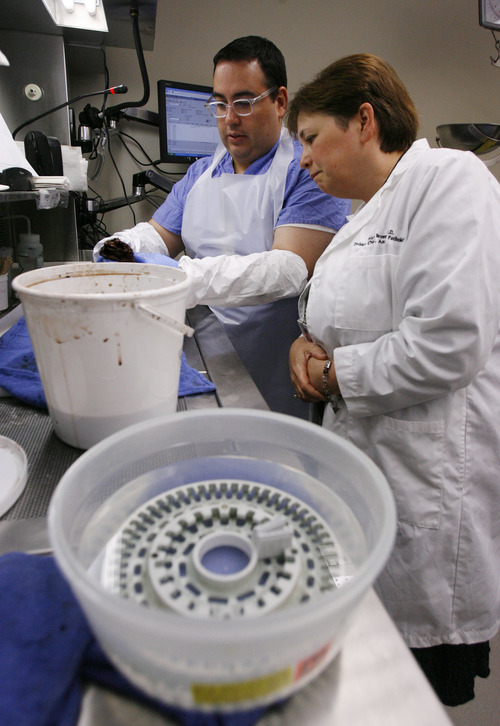 Francisco Kjolseth  |  The Salt Lake Tribune Mary Bronner, division chief of anatomic pathology at the Huntsman Cancer Institute, overlooks the work being done by chief resident Chris Garcia as he examines a patient's colon sample, looking for areas to test.