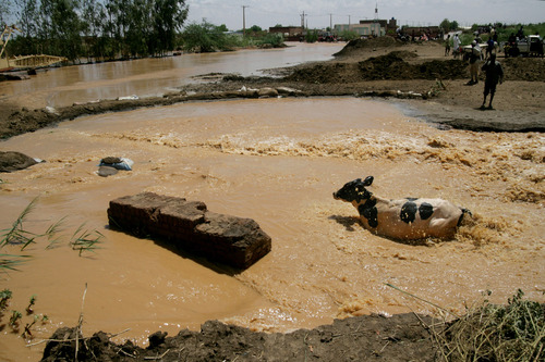 In this Saturday, Aug. 3, 2013 photo, a cow wades its way through flood water in Khartoum, Sudan. Heavy rains this week have flooded roads in the capital Khartoum and other parts of the country. (AP Photo/Abd Raouf)