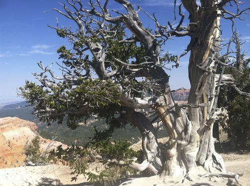 Lindsay Whitehurst   The Salt Lake Tribune Spectra Points and Ramparts Overlook trail at Cedar Breaks.