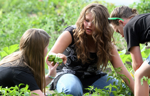 Rick Egan  | The Salt Lake Tribune   Julianne Orton, 15, (center) talks to Kylee Salazar (left) and Shelbee Hoffman (right) as they gather vegetables from the Community Garden, with the West Point Youth Council, Wednesday, Aug. 7, 2013. Orton attends an online charter school, which allows her to arise later on school mornings than do her peers in traditional schools.