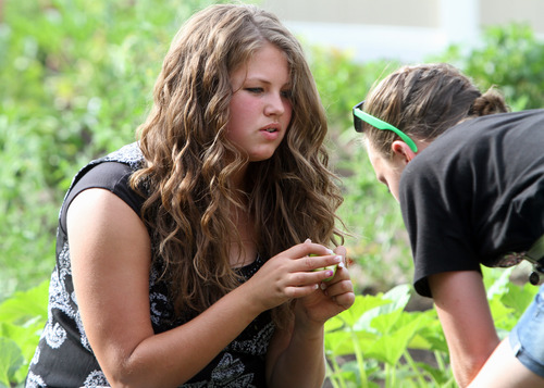 Rick Egan  | The Salt Lake Tribune   Julianne Orton, 15, (right) talks to Shelbee Hoffman (right) as they gather vegetables from the Community Garden, with the West Point Youth Council, Wednesday, Aug. 7, 2013. Orton attends an online charter school, which allows her to arise later on school mornings than do her peers in traditional schools.
