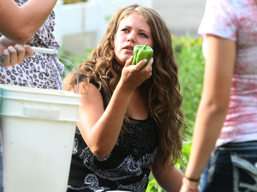 Rick Egan    The Salt Lake Tribune   Julianne Orton, 15, gathers vegetables from the Community Garden, with the West Point Youth Council, Wednesday, Aug. 7, 2013. Orton attends an online charter school, which allows her to arise later on school mornings than do her peers in traditional schools.
