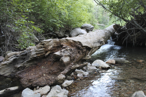 Jessica Miller | The Salt Lake Tribune A watering hole near Wheeler Canyon trail in Ogden. (July 30, 2013.)