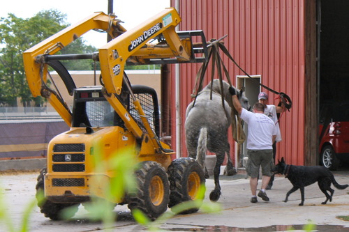 Handlers move a sick carriage horse using heavy equipment. (Photo courtesy of Jeremy Beckham)