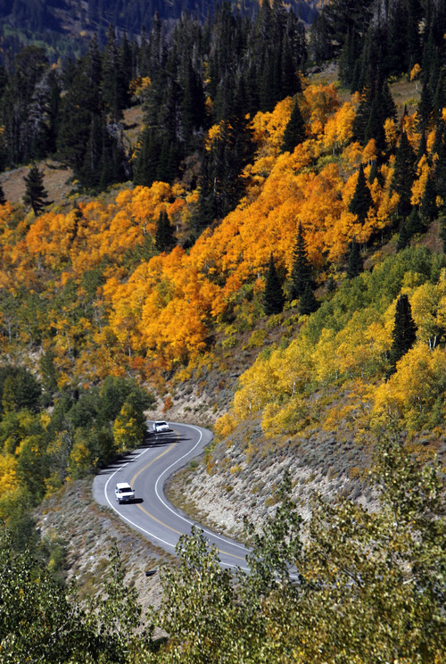 Francisco Kjolseth  |  The Salt Lake Tribune Cars make their way up to Guardsmans Pass as bands of color light up the mountain landscape during the fall color transformation taking shape on Thursday, September 29, 2011.