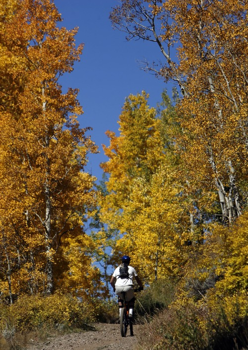 Francisco Kjolseth  |  The Salt Lake Tribune Kai Larsen of Salt Lake begins his ride of the Crest Trail near Guardsmans Pass as bands of color light up the mountain landscape during the fall color transformation taking shape on Thursday.
