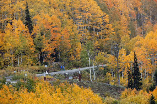Steve Griffin | The Salt Lake Tribune  Rain falls as hikers walk among the changing leaves in Albion Basin near Alta Monday September 24, 2012.