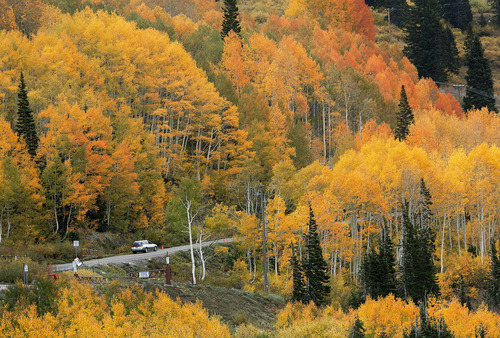 Steve Griffin | The Salt Lake Tribune  Trees glow with color as rain falls in Albion Basin near Alta Monday September 24, 2012.