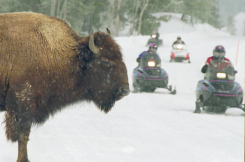 Perry Backus  |  Associated Press file photo Snowmobilers zoom by a bison in Yellowstone National Park Monday, Feb. 17, 1997. The National Park Service on Thursday, Aug. 22, 2013, set the stage for a new winter access management system affecting oversnow vehicles in Yellowstone.